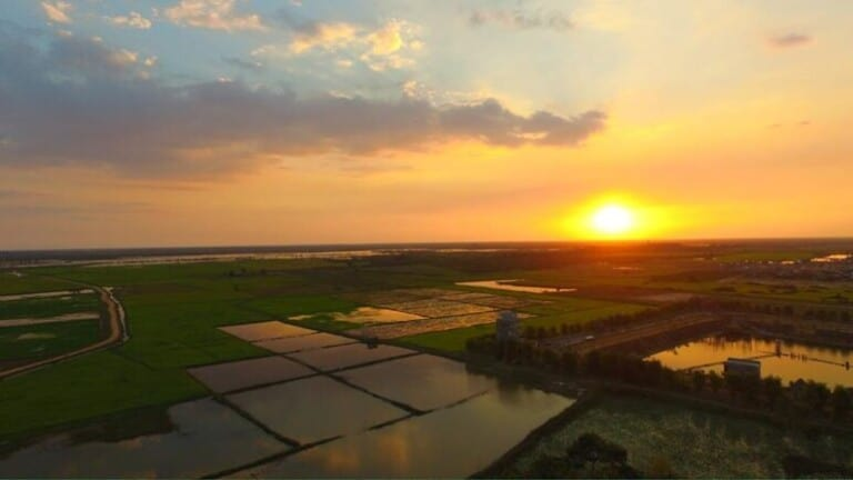 Sunset over rice paddy in Cambodia